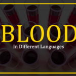 blood-in-different-languages