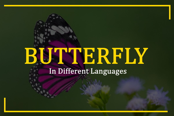 butterfly-in-different-languages