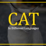 cat-in-different-languages