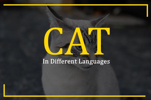 cat-in-different-languages