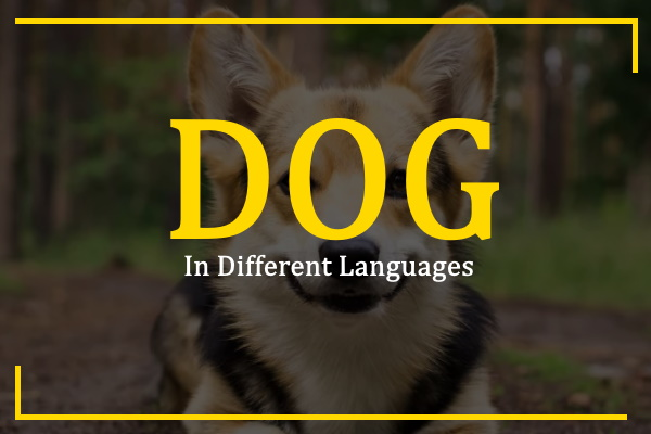 dog-in-different-languages