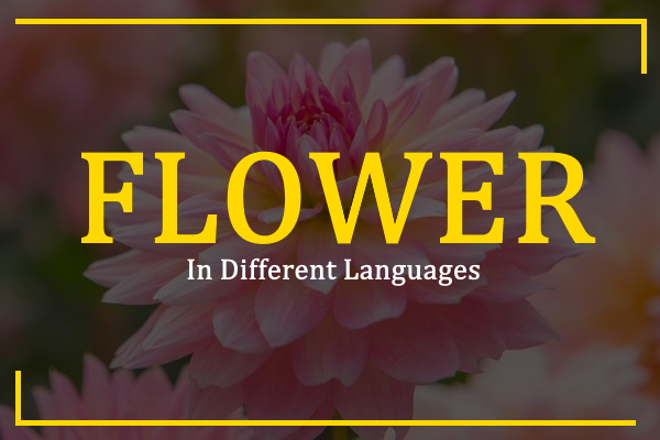 flower-in-different-languages