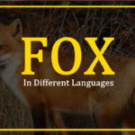 fox-in-different-languages