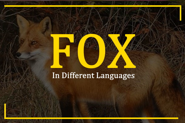 fox-in-different-languages