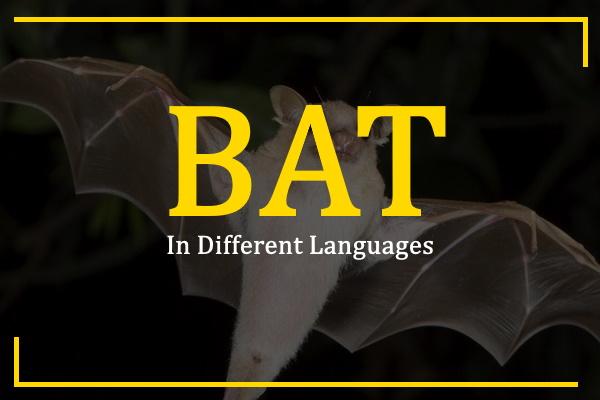 bat-in-different-languages