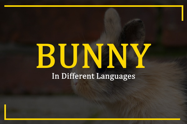 Photo of How to Say Bunny in Different Languages