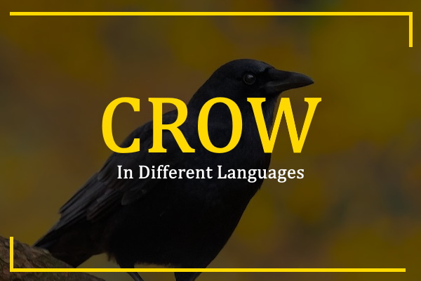 Photo of How to Say Crow in Different Languages