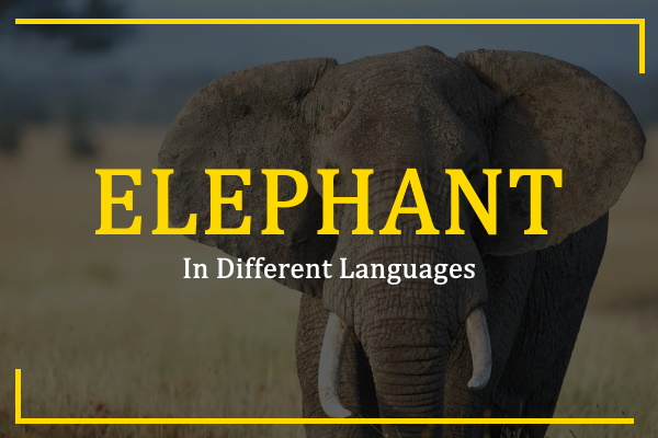 Photo of How to Say Elephant in Different Languages