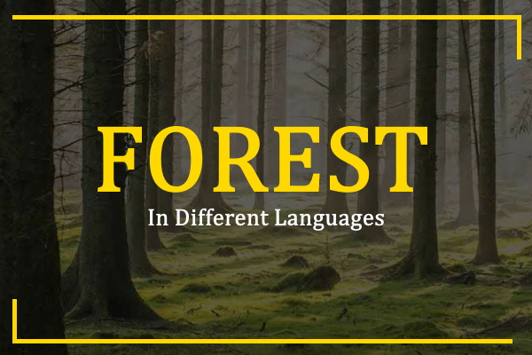 forest-in-different-languages