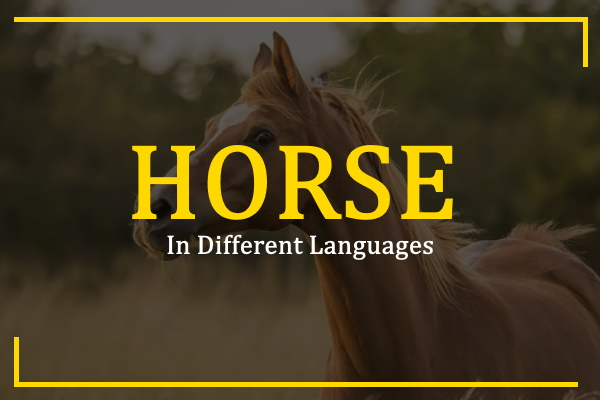 horse-in-different-languages