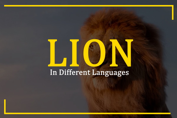 lion-in-different-languages