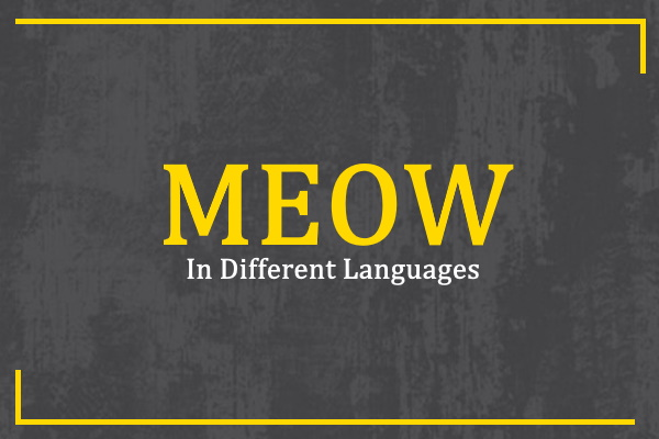 meow-in-different-languages