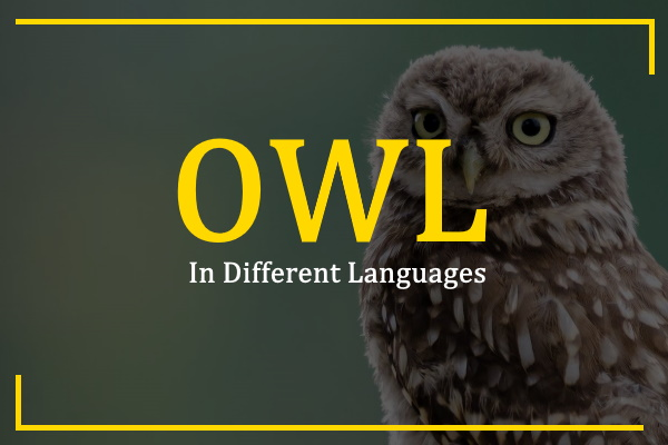 owl-in-different-languages