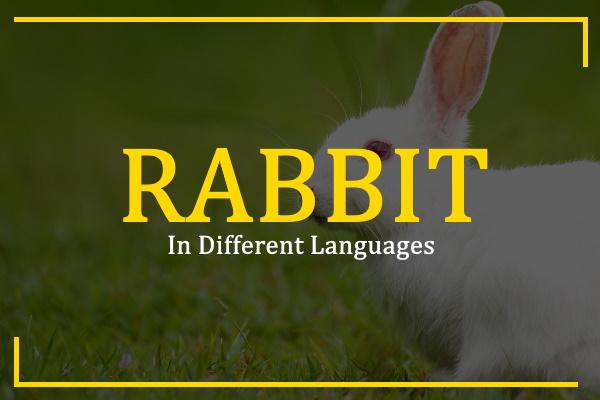 rabbit-in-different-languages