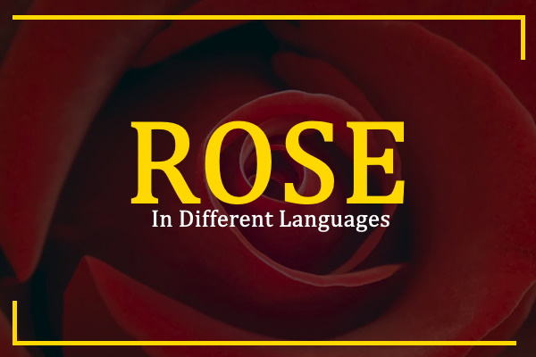 rose-in-different-languages
