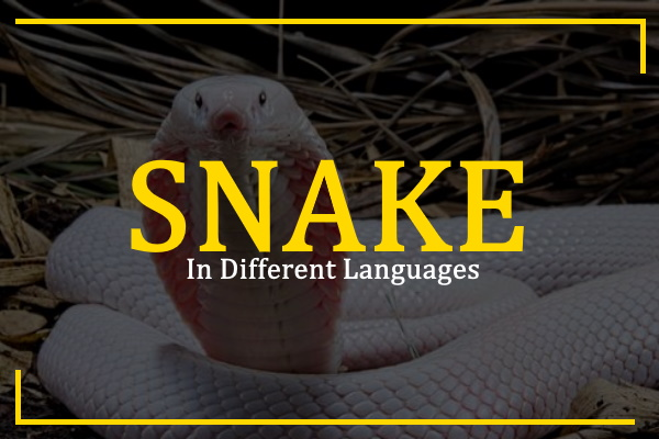 snake-in-different-languages