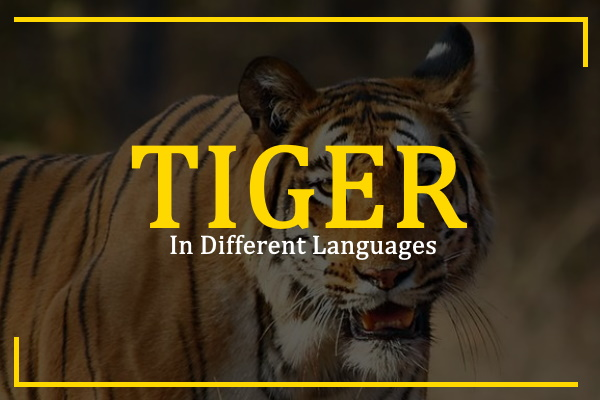 tiger-in-different-languages