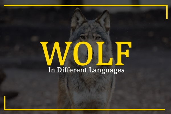 wolf-in-different-languages