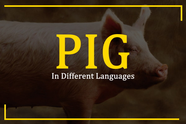 pig-in-different-languages