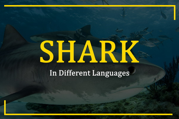 shark-in-different-languages