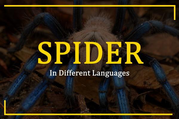 spider-in-different-languages